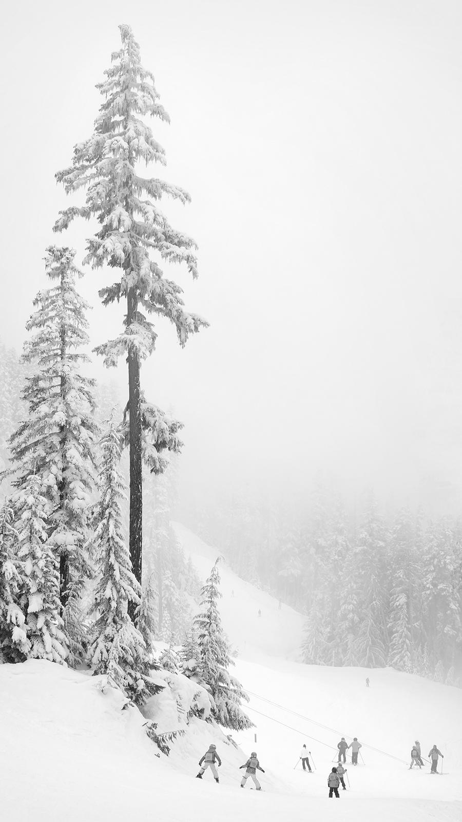 Skiing III, 2017