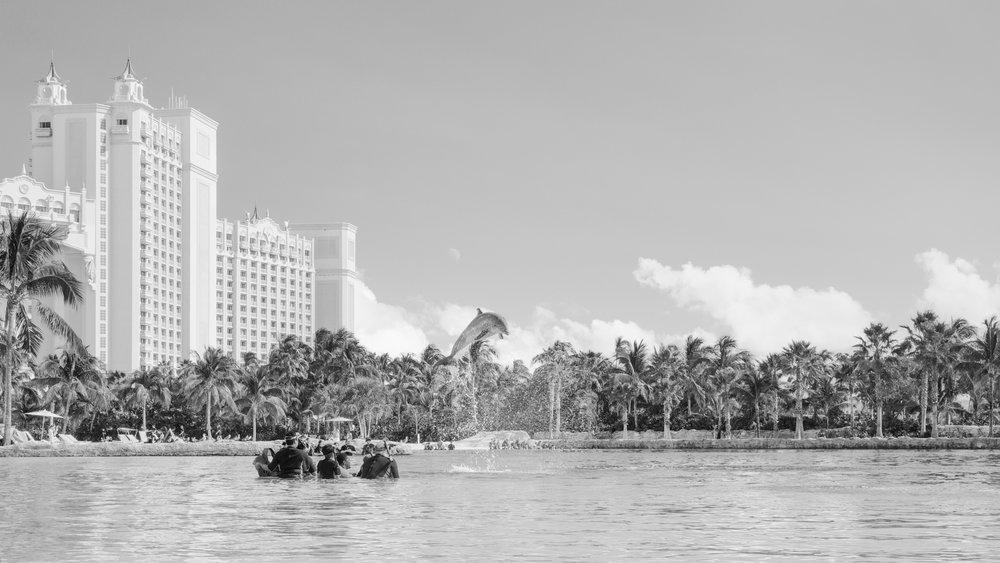 On the Reef II, 2017.