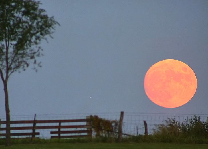 harvest_moon_dan_bush.jpg