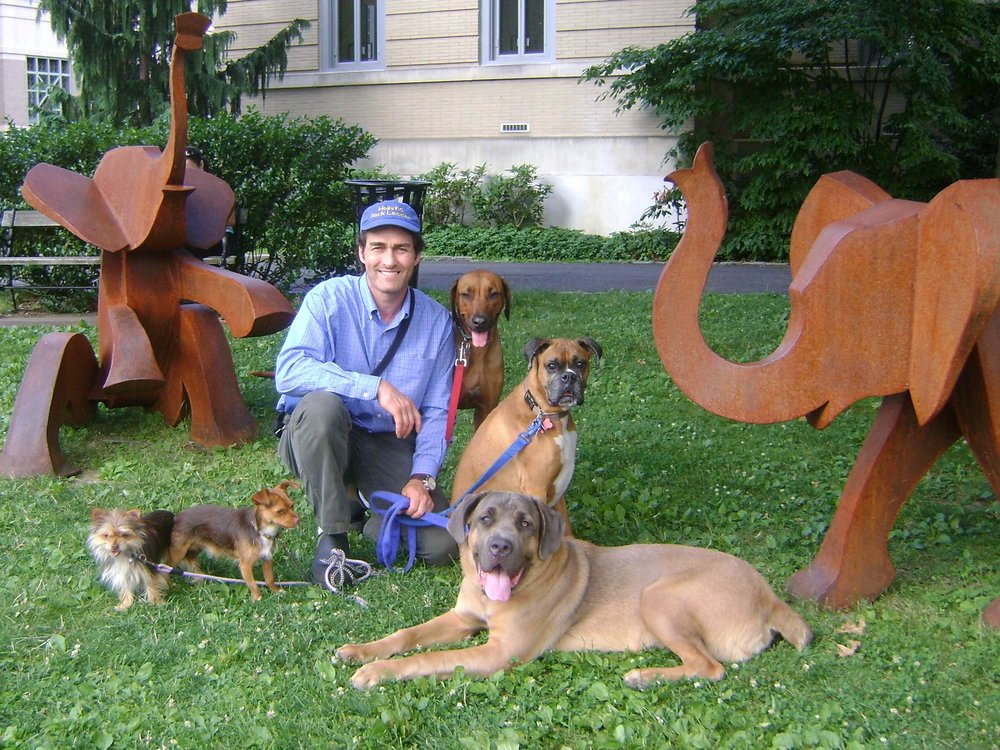 From the left: Sasha, Rocky ( Yorkies), Rufus (Cane Corso), Sienna ( Rhodesian Ridgeback), Baily ( Boxer)