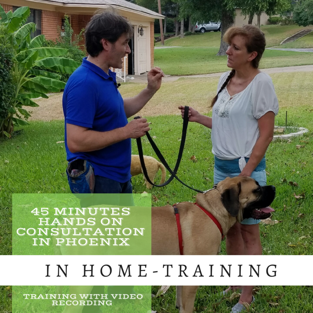 One or two  in-home sessions  are usually enough for Roman to  address 85%  of behavior issues. From barking at the door, leash pulling, digging, or coming when called, Roman will help you achieve your goals with force free, pain free science-based methods. Your dog will be calmer, understand his job and be a better behaved and happy family member.  Become your dog's best trainer.    Price: $119,99*    Book Now   To schedule a  In Home Follow-up Consultation  click   HERE   *    Strong Bond Transformation Bundle   This is the best solution to address 90% off complex behavior issues in your home. In  just five weeks , you'll enjoy a transformed, better behaved dog.  Results guaranteed**.    Price: $584,99*  Get your dog's transformation package   CLICK HERE    *) $0.55 per mile fee may apply for out of city limits round trip **) If the first session does not improve your dog's behavior you get your money back. Also your discounted price is guaranteed for life.