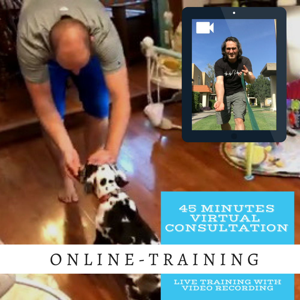 Become your dog's best trainer, from the comfort of your home. in a 45 minute consultation, Roman will explain step by step what to do by showing you how, watching your interaction with your dog, then teaching you to teach your dog what you learned. This way your dog will see you as the only source of information. You will remain in your parenting power and your dog will love you even more.