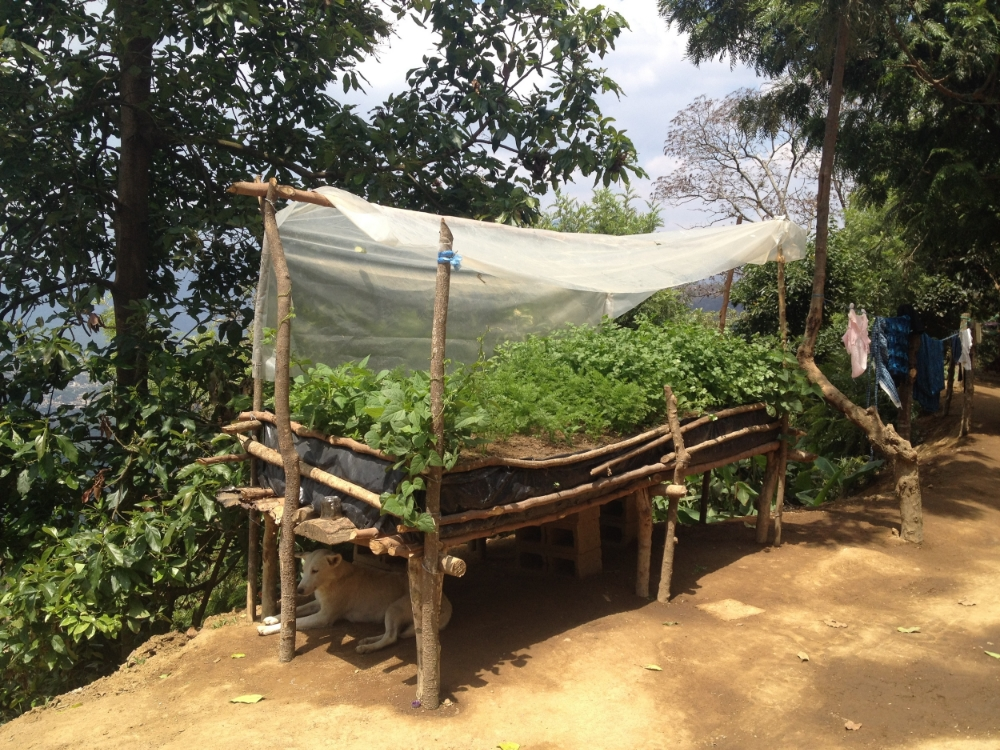 Raised edible garden made out of branches, dirt and trash bags in a village near the Earth Lodge. Call me a naive idealist and help me. When the nature has so much to offer, there are 1 out of 2 children under the age of 5 in  chronic undernutrition in Guatemala . It's at the highest in the region and the fourth highest in the world. I can't help but think, this is a  design challenge.