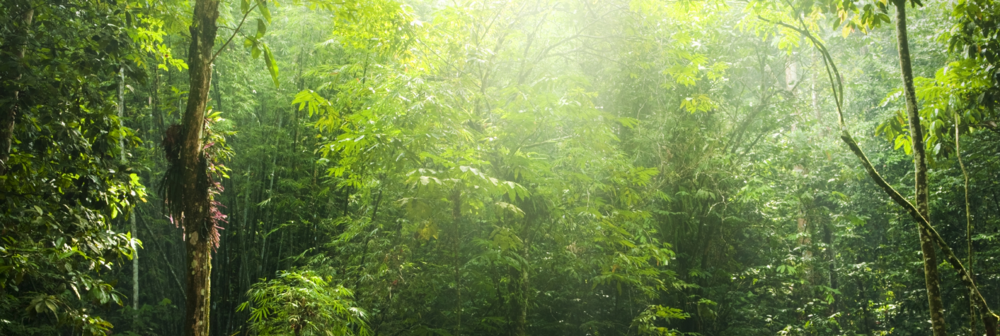 "<img src=""sustainablejungle.jpg"" alt=""sustainable jungle"" title=""Sustainable Jungle""/>"