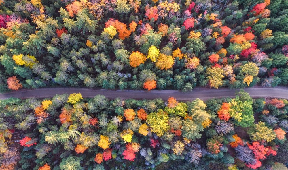 fall road aaron-burden-.jpg