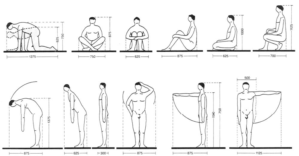 """Medidas básicas del cuerpo humano.""""Arte de proyectar arquitectura"""" de Neufert"""