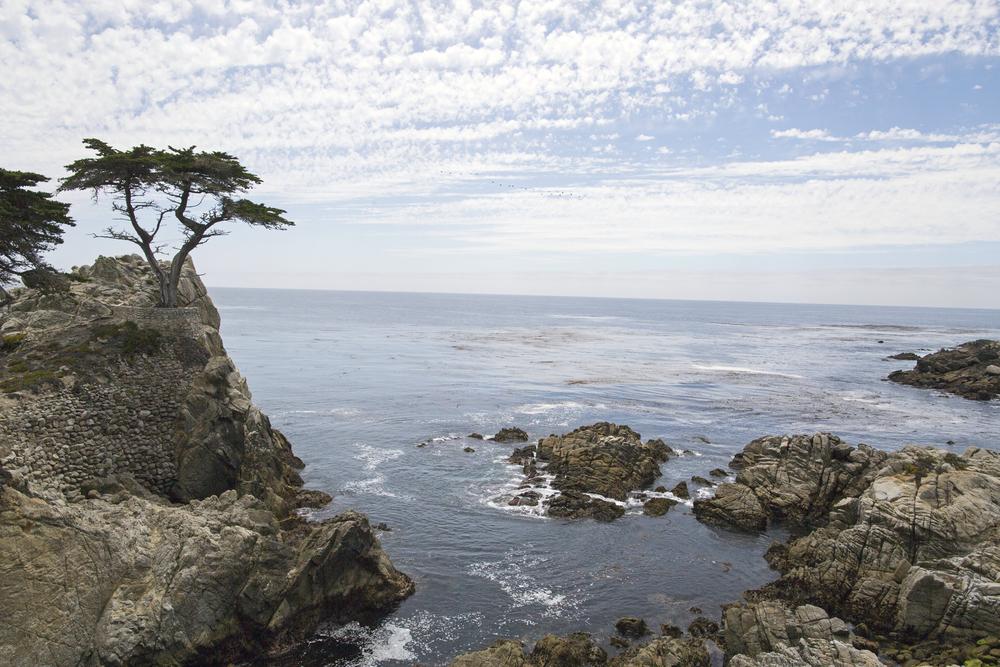 Tree-fb.jpg
