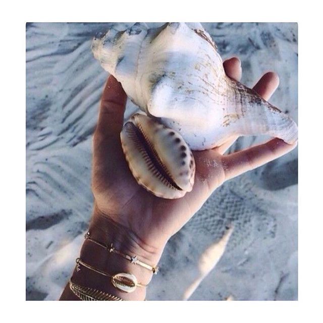 A cowrie and a conch walk into a bar... just kidding that would never happen.  #pinterest #inspiration