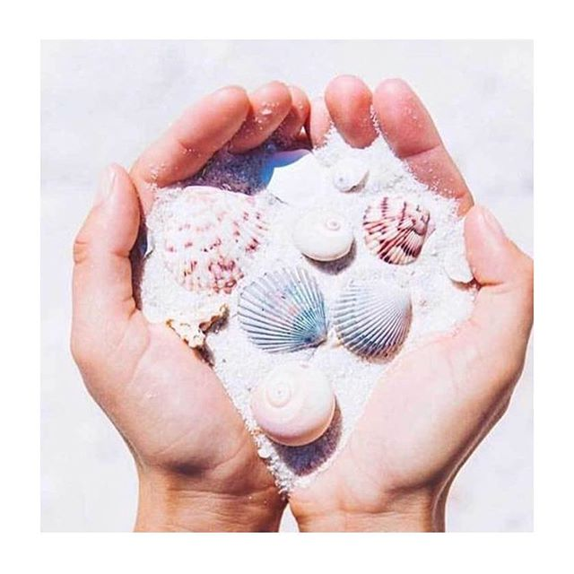 handful of sea shells 🐚... #inspiration #pinterest