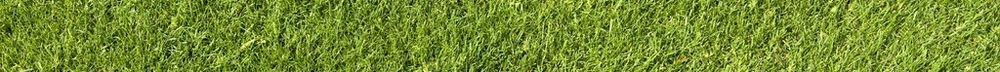 green_grass_texture_01_by_goodtextures.jpg