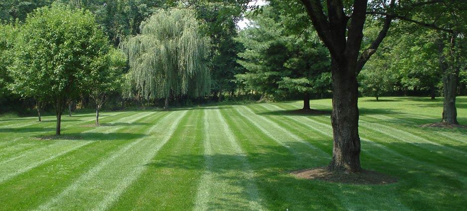 Lawn Care — Simcut Lawn Care