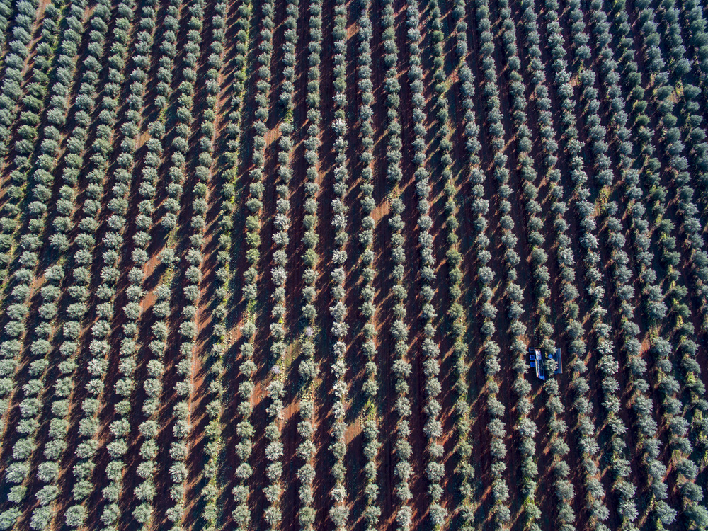 Tree Tops Olive Grove and Factory WEB 052.jpg