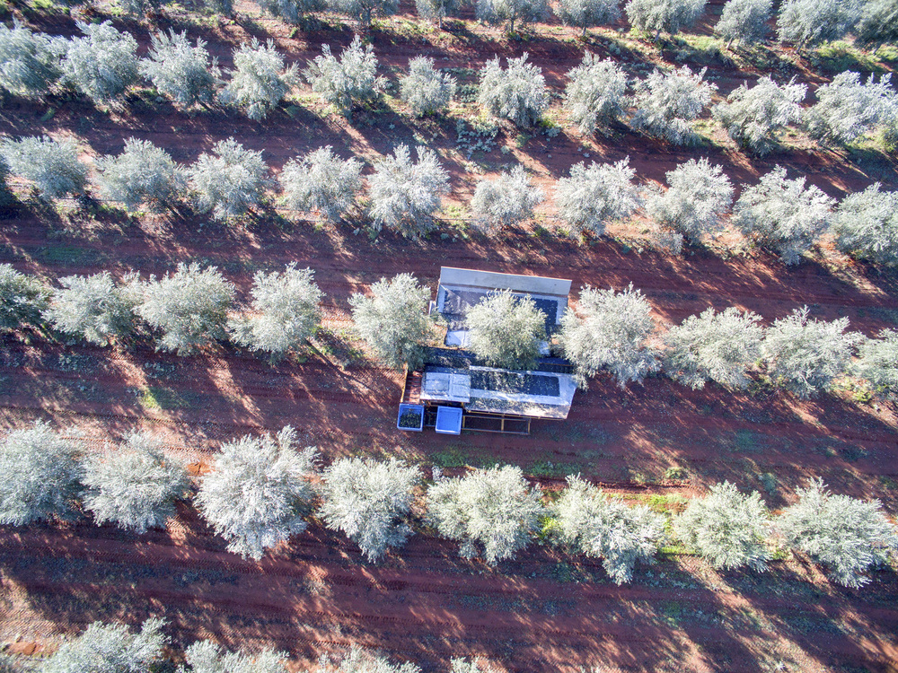 Tree Tops Olive Grove and Factory WEB 053.jpg