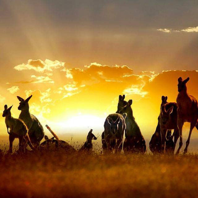LOCATED IN THE RIVERINA AUSTRALIA