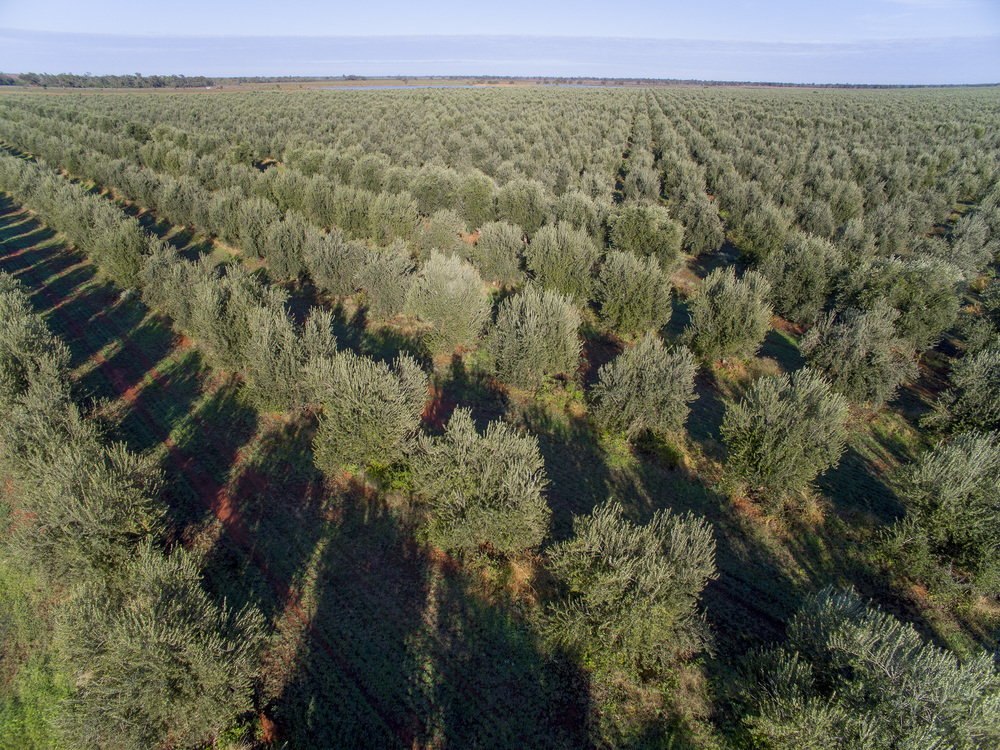 Tree Tops Olive Grove and Factory WEB 047.jpg