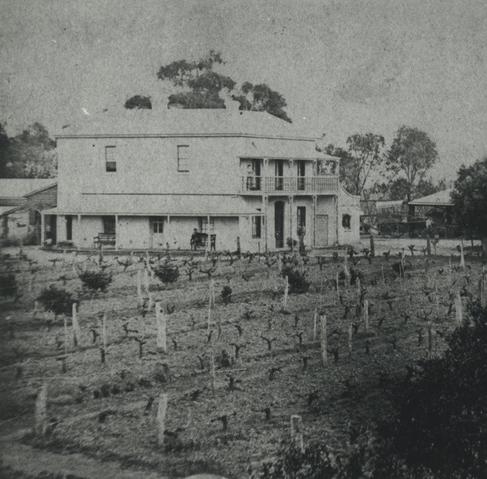 Bankside Vineyard, Photograph State Library of SA