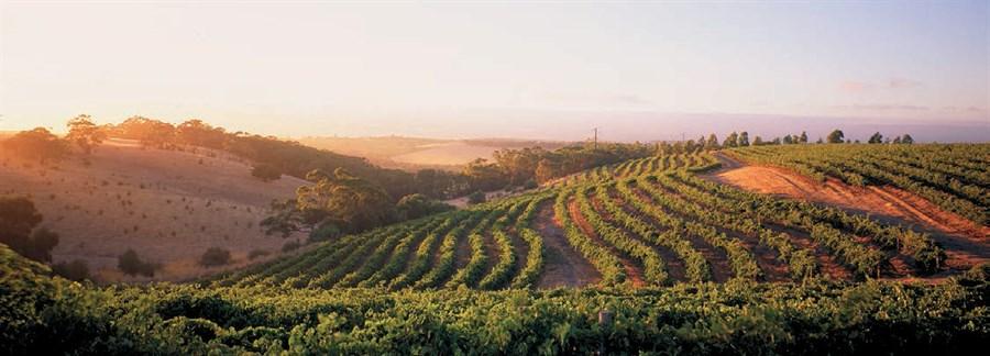 Thomas Hardy's vineyard