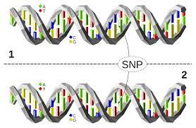Mthfr Gene Mutation An Article  Trendy With Mthfr Gene Mutation An