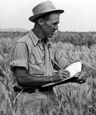 Norman Borlaug checks wheat plants for rust in 1964 at a field station near Ciudad Obregón in Mexico.