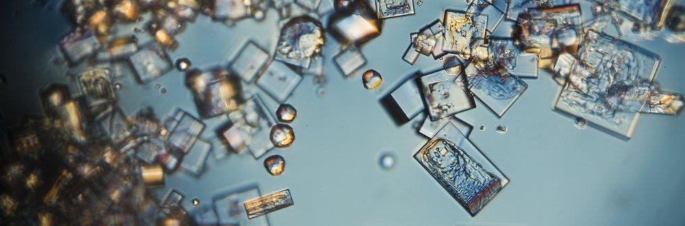 Microscopy_Arctic.jpg