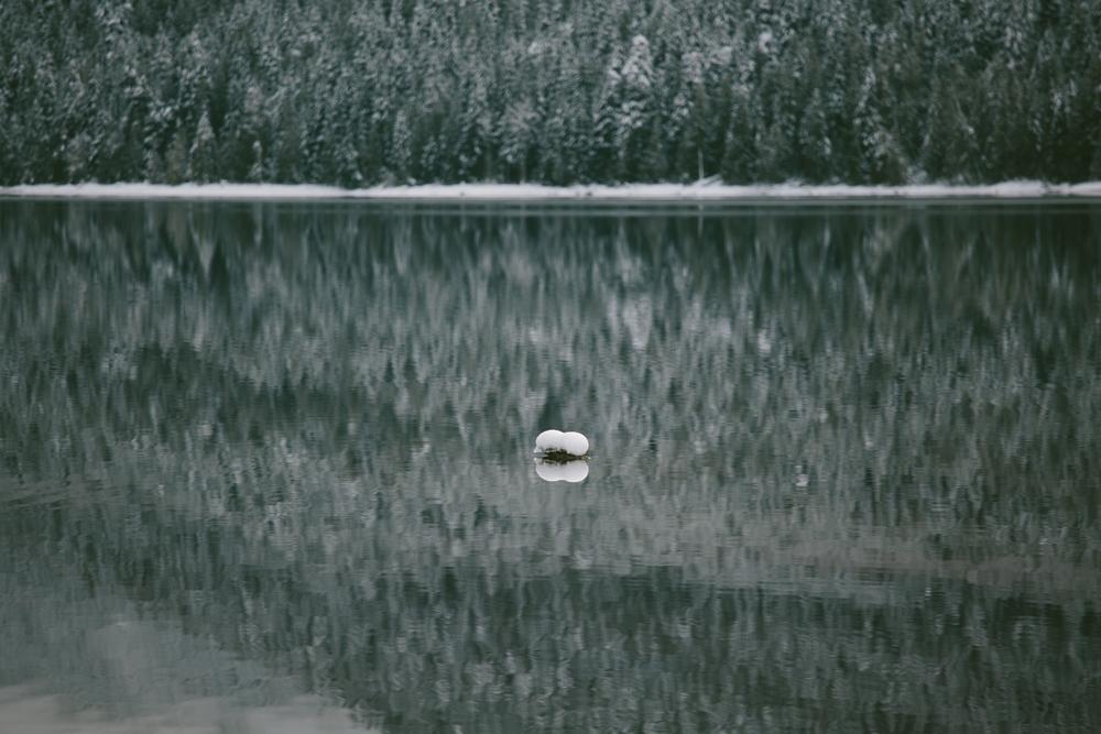 winter-7340.jpg