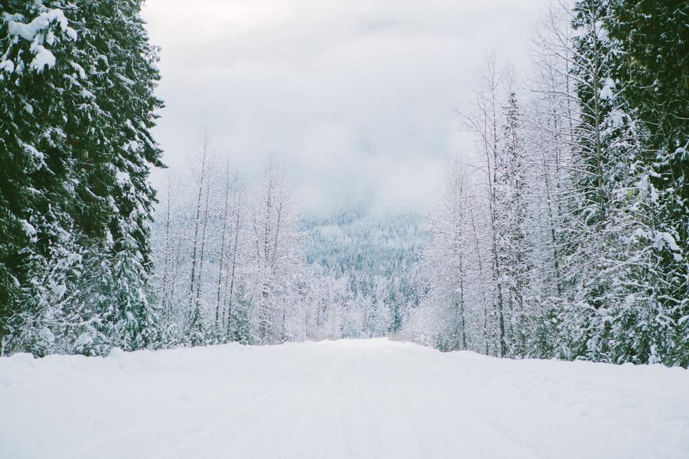 winter-7404.jpg