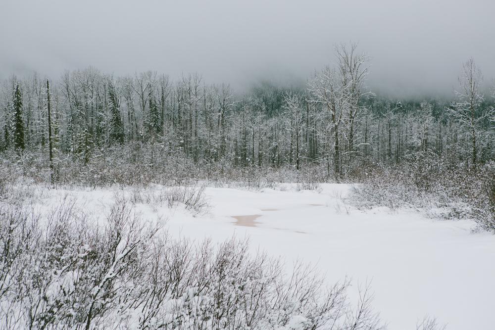 winter-7405.jpg