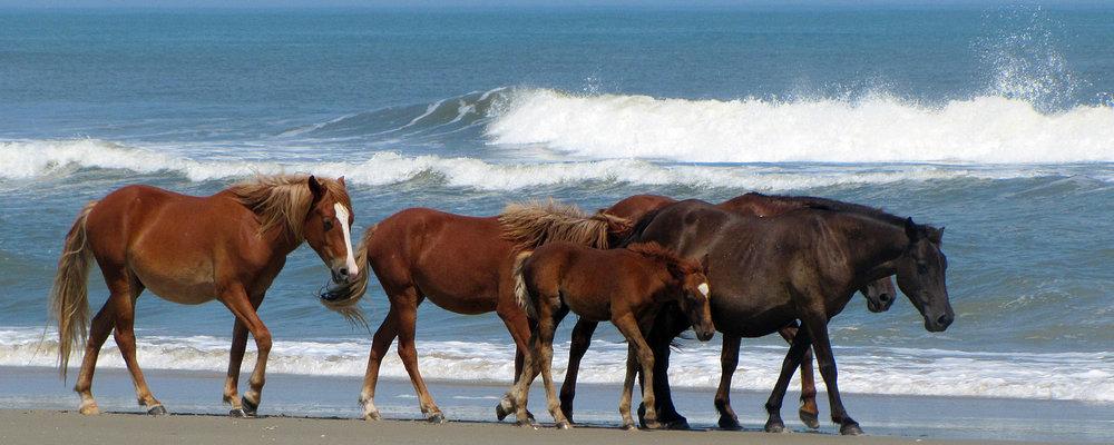 wild ponies.jpg