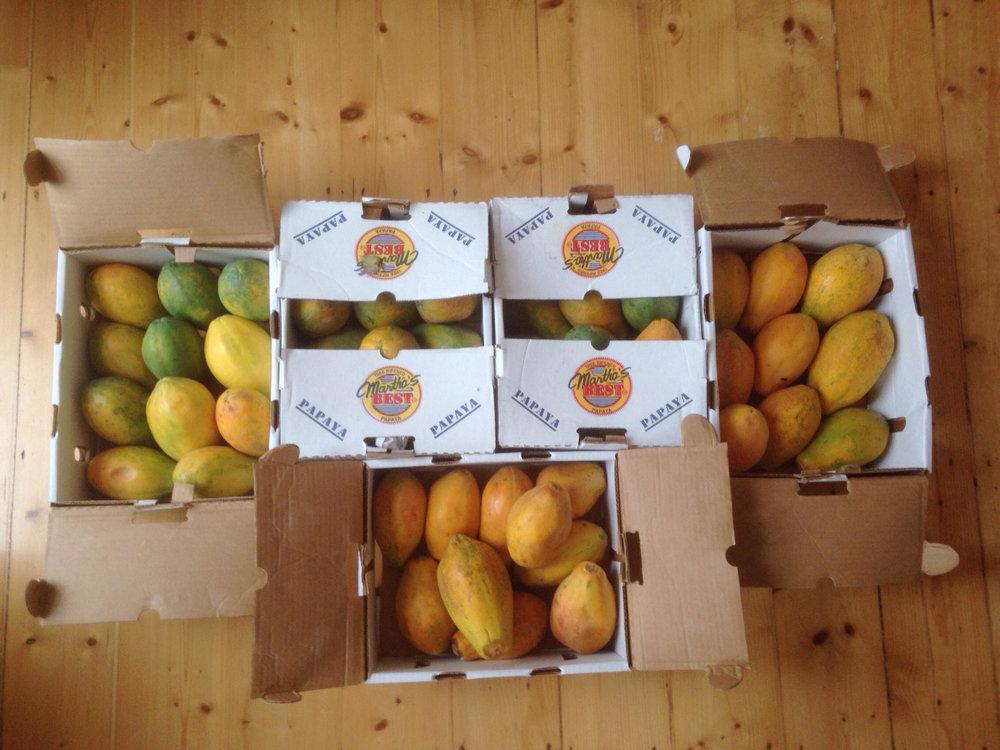 Papaya_fruit.jpg