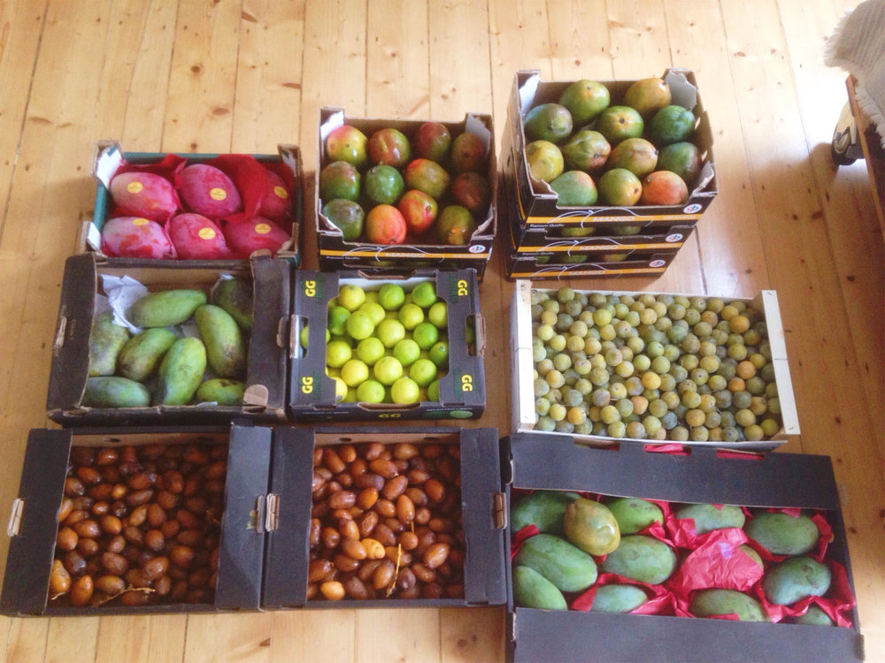 fruit_haul .jpg