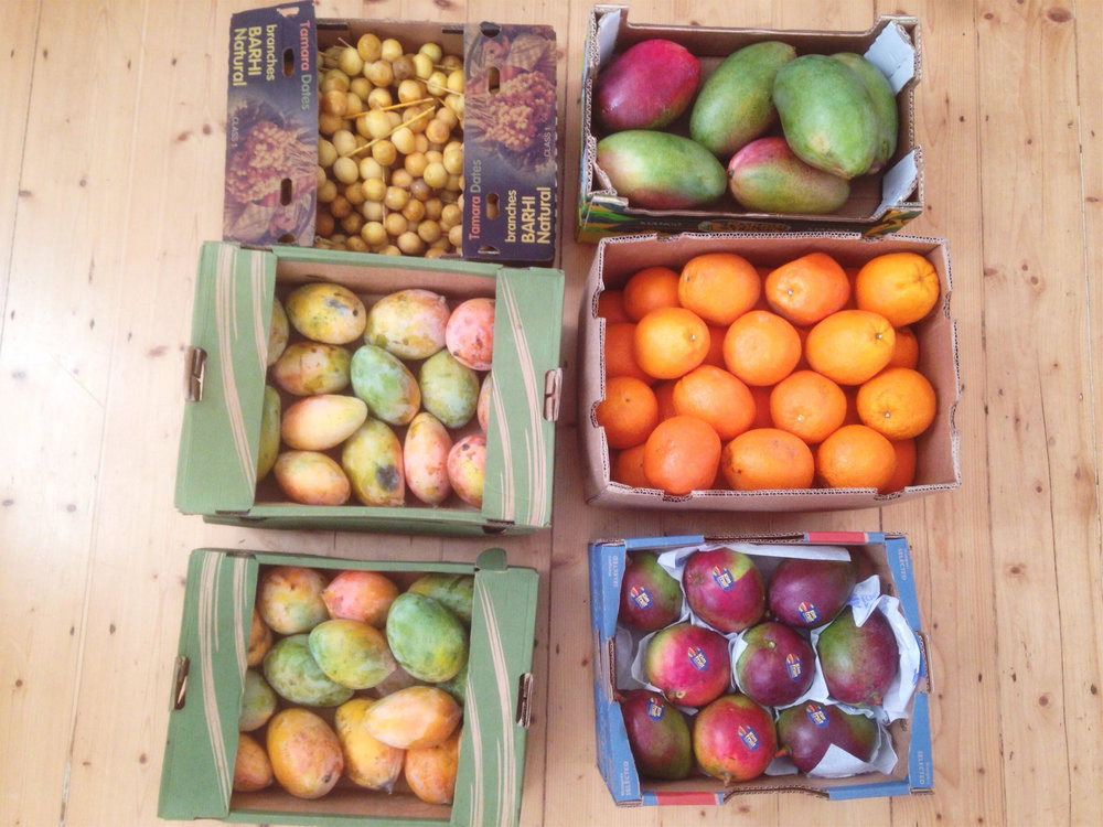 mango_fruit_haul.jpg