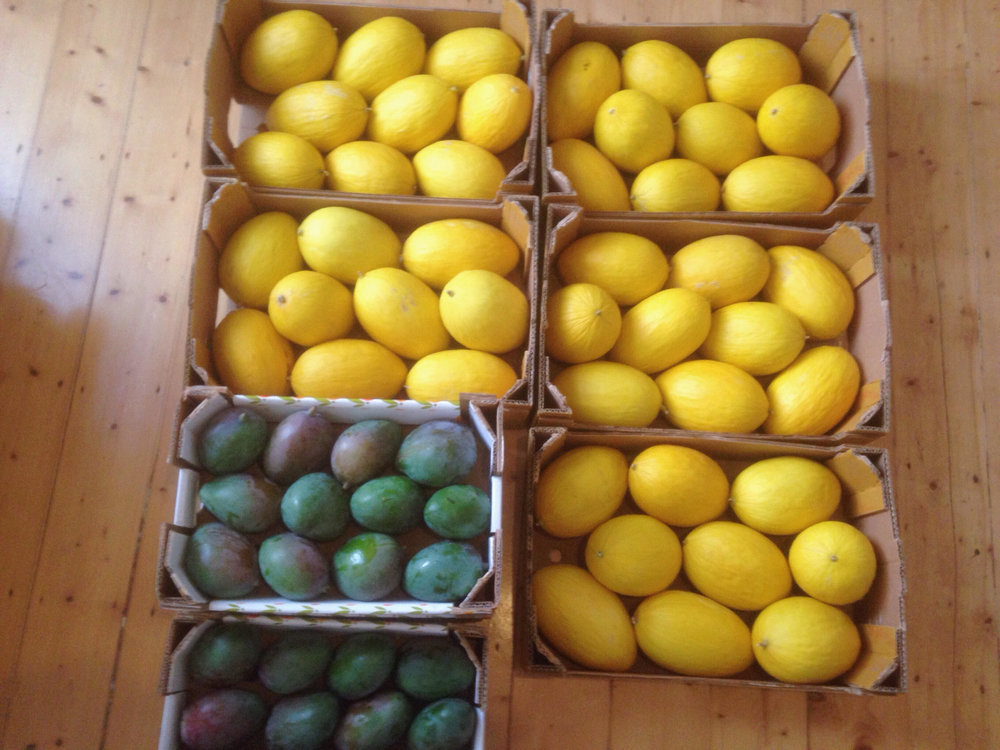 Mango_melon.jpg