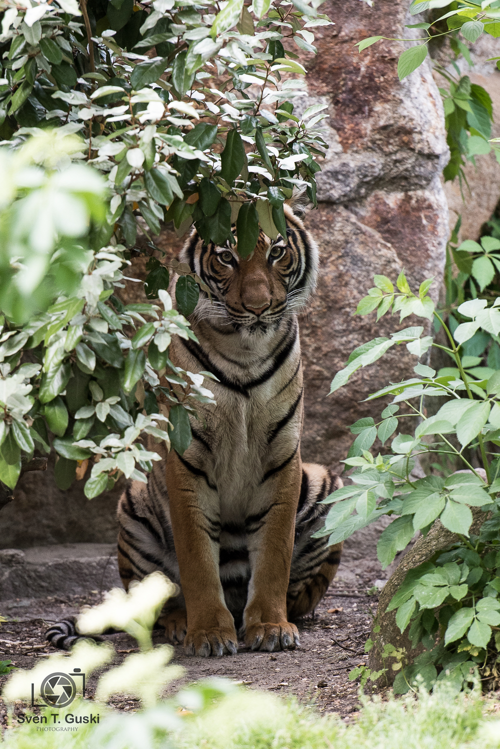 Ah ein Tiger ist auf dem Bild gewesen ...