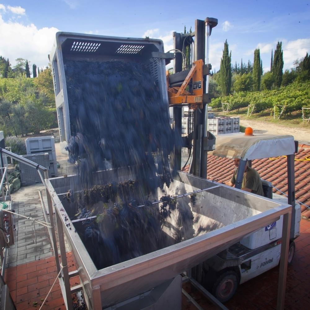 Dopo il necessario affinamento nasce il San Gimignano Rosso Folgòre '99. Si svolge la prima vendemmia per una nuova Vernaccia: Vigna Santa Margherita,prodotta integralmente con le uve del vigneto da cui Panizzi ha avuto origine.