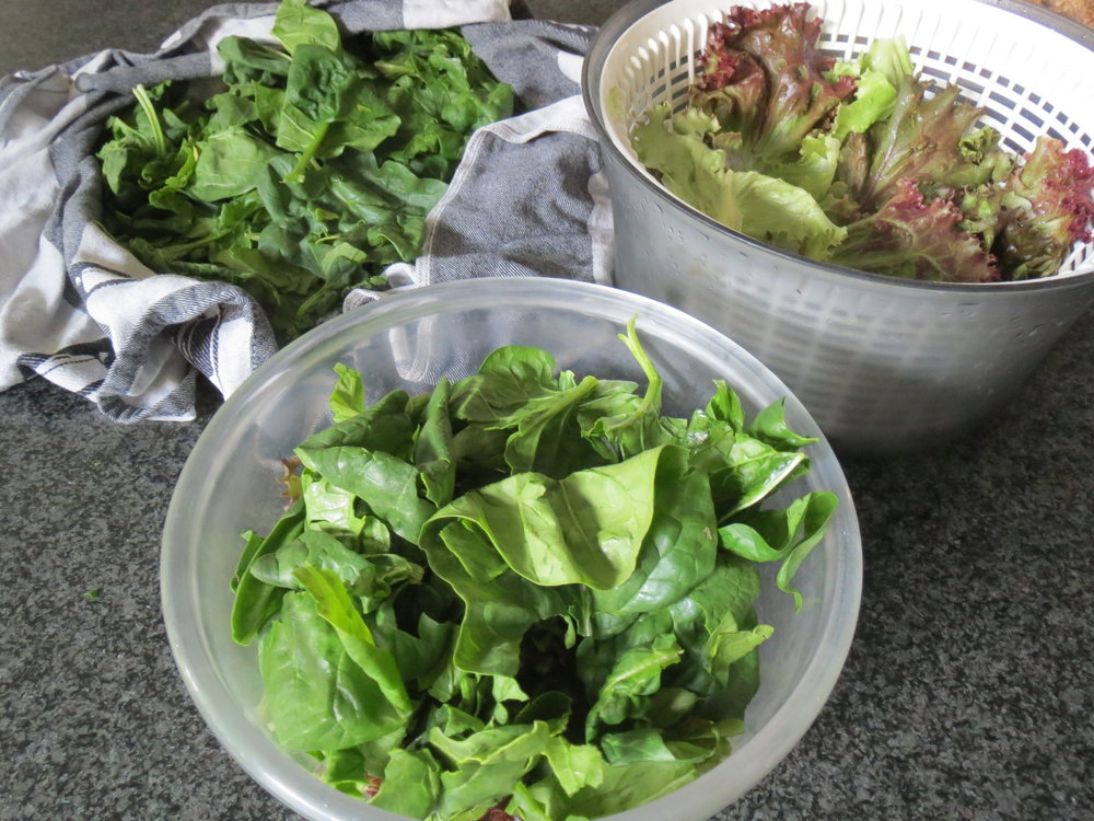 Spinach and chene lettuce