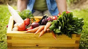 organic food.jpeg