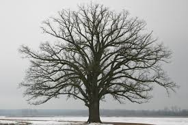 tree in winter.jpeg