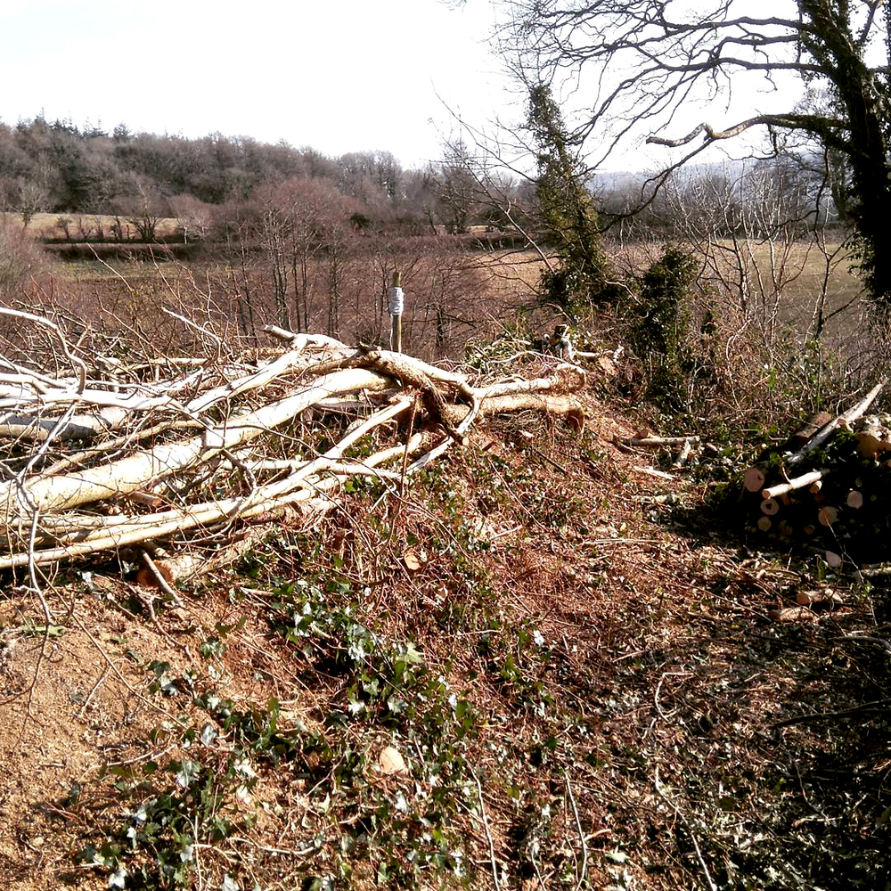 Hedge laying Services by Chris Bond, Devon/Cornwall/Southwest England UK.  www.stonewalling-hedgelaying.co.uk
