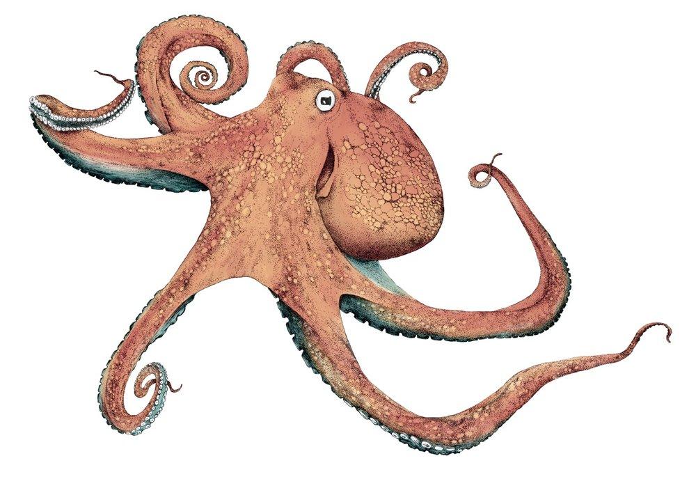 Blæksprutte1.jpg