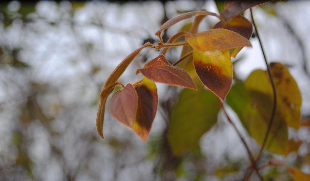 EllaNadeau-Leaf.jpg