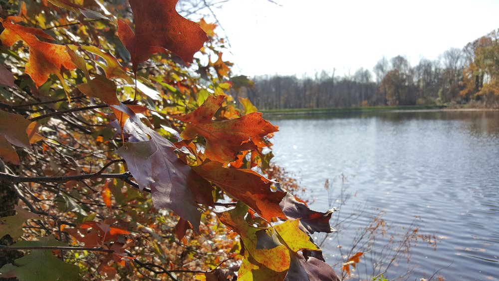 Fall Foliage Lake.jpg