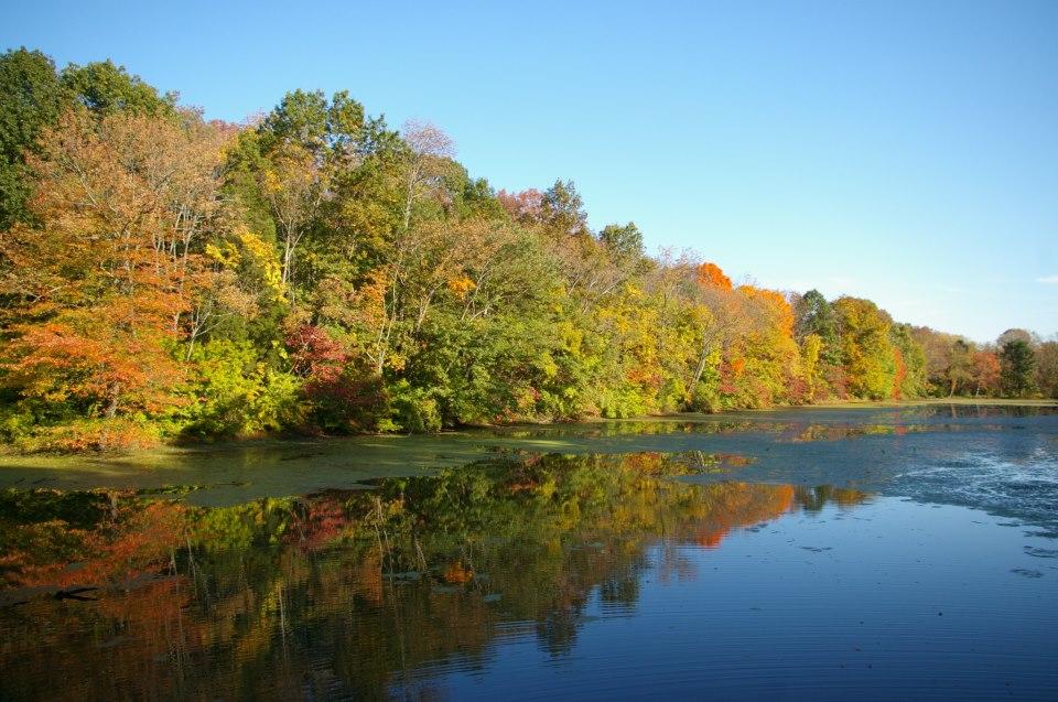 fall foliage (1).jpg