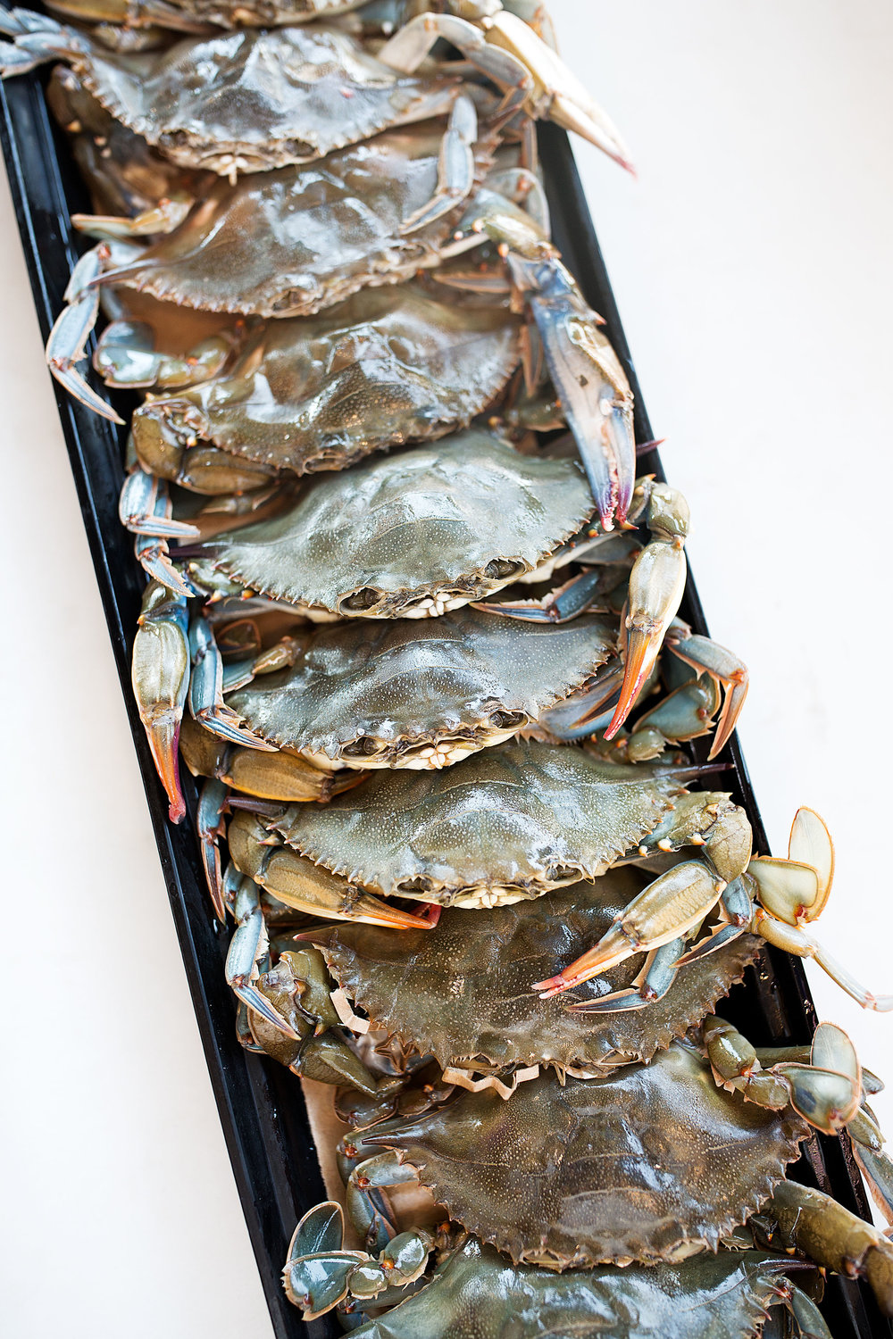 soft shell crabs lined up raw