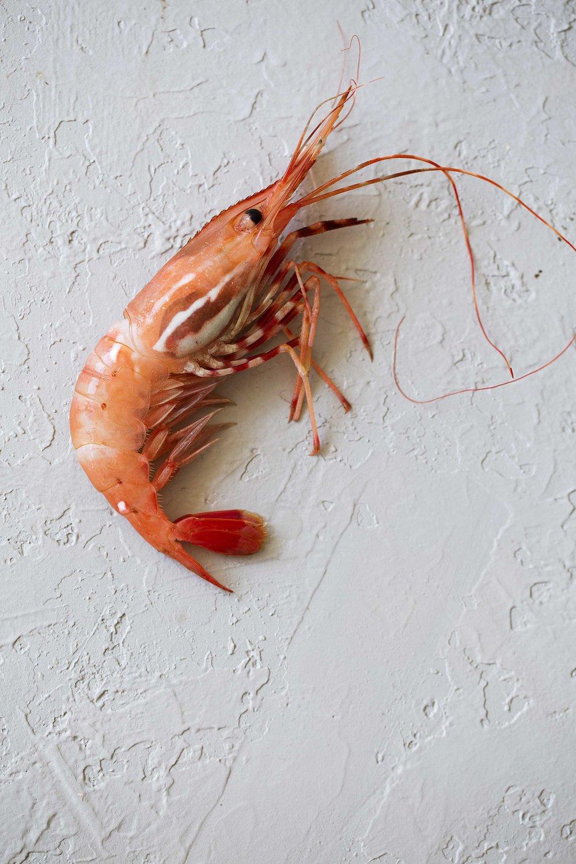 santa barbara spot prawns