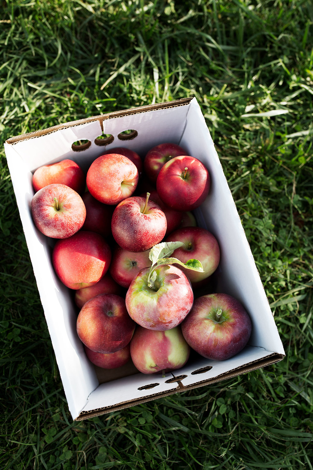 apple picking cooking with cocktail rings