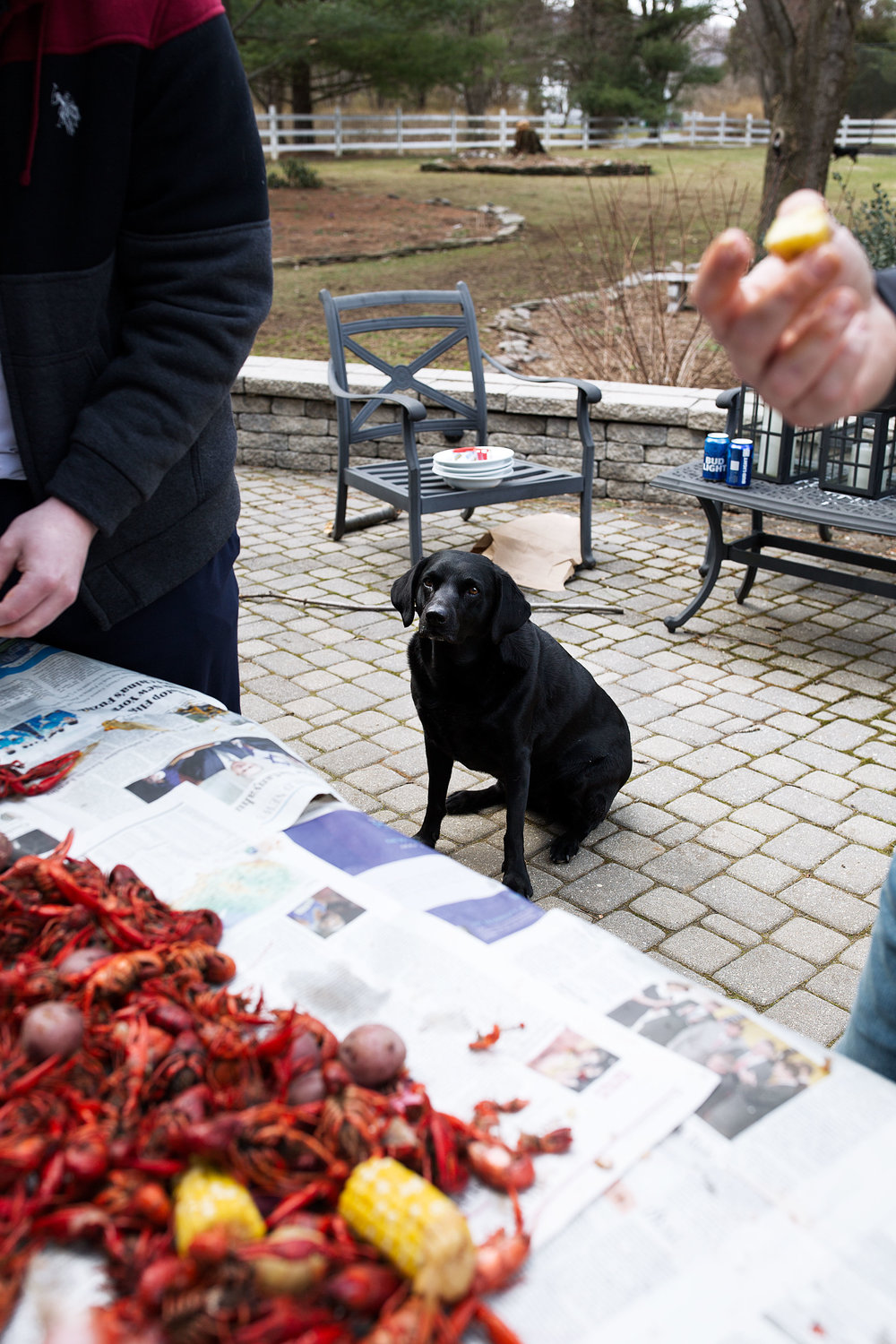 traditional crawfish boil recipe from cooking with cocktail rings fenway black lab