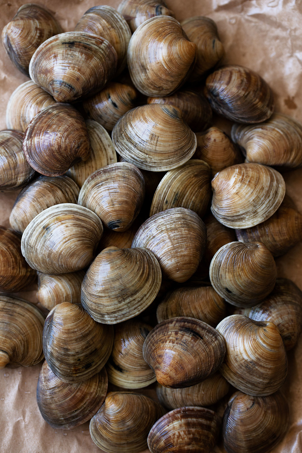 littleneck clams for clam chowder