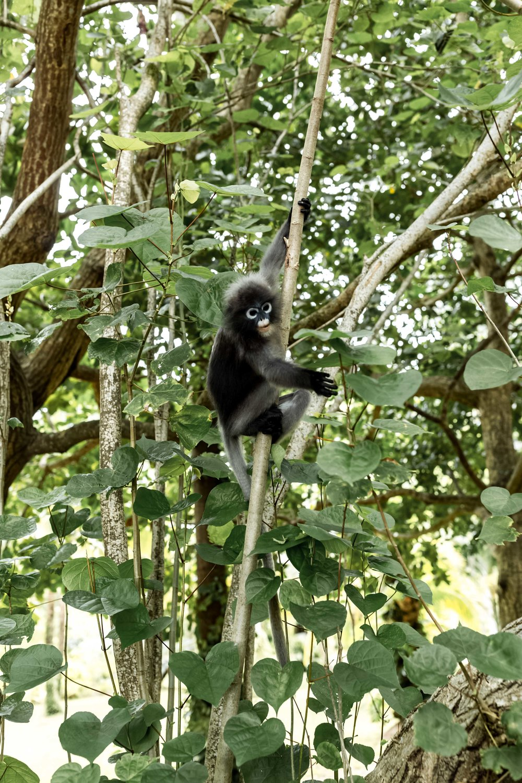 monkeys in the trees railay beach