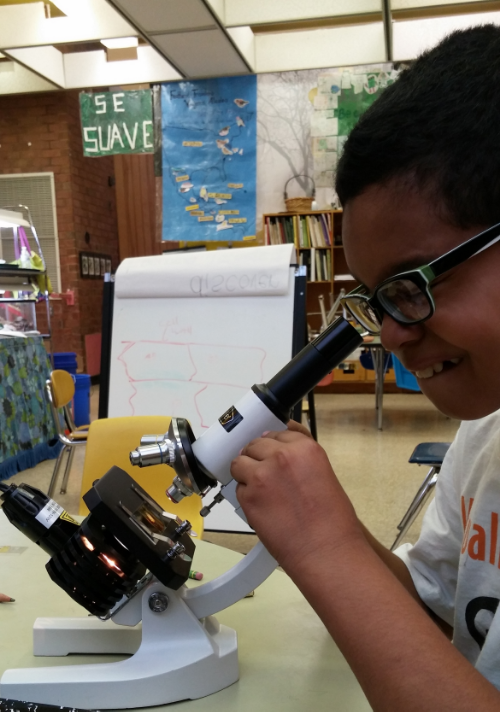 A student gets his first look at a plant cell at Bancroft Elementary School.