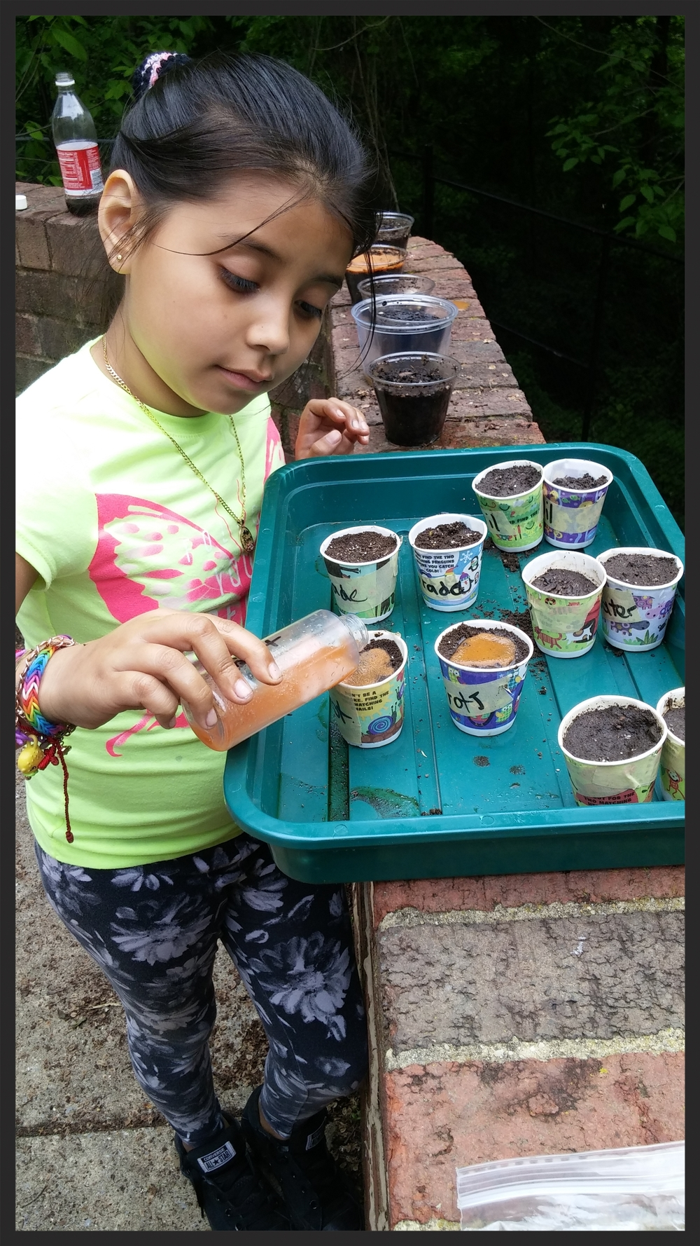 Adding a super special carrot water mix to her group's plants.  Will they grow?